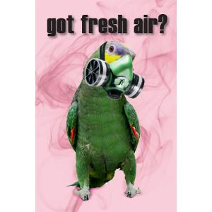 Got Fresh Air? Bird Postcard