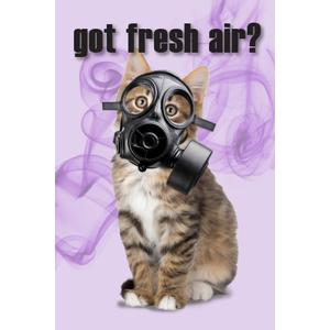 Got Fresh Air? Cat Postcard