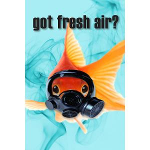 Got Fresh Air? Fish Postcard