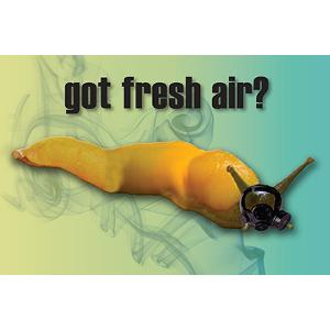 Got Fresh Air? Banana Slug Postcard